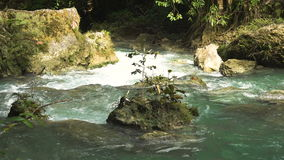 River in the rainforest stock video footage