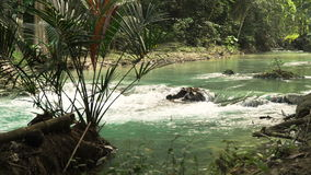 River in the rainforest stock footage