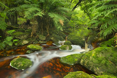 River through rainforest in the Garden Route NP, South Africa. Red river through lush temperate rainforest in the Garden Route National Park in South Africa Stock Image