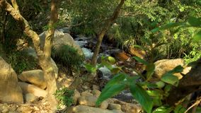 River on rainforest landscape. Rapid water stream in rocky creek in tropical forest in mountain. Close up water flowing. In mountain river. Tropical plants on stock video footage