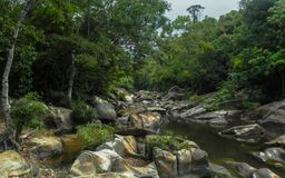 River in the rainforest royalty free stock photo