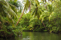 River Through a Rainforest. A picture of a Ugum River that runs through Guam Royalty Free Stock Image