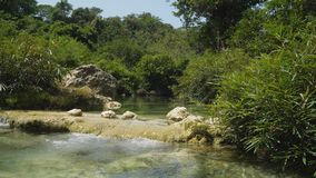 River in the rainforest. stock images
