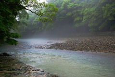 River in rainy jungle Royalty Free Stock Image