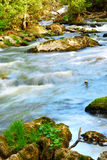 River rapids. Water rushing among rocks in river rapids in Ontario Canada Royalty Free Stock Photo
