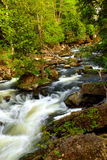 River rapids. Water rushing among rocks in river rapids in Ontario Canada Royalty Free Stock Photos