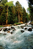River rapids in forest. Scenic view of turbulent Ulu-Murugu river rapids in picturesque forest, Russia Stock Photos