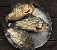 River raw fish - carp, in a round plate Stock Photo