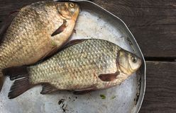 River raw fish - carp, in a round plate Royalty Free Stock Image