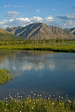 River reach in a broad mountain valley. Stock Photos