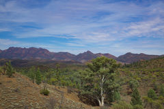 River red gum and ancient hills. The red hills of the Flinders Range with a river red gum's white trunk Royalty Free Stock Photos