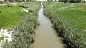 River reeds flowing. River flowing from Orihuela to Guardamar - Rio Segura stock video