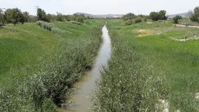 River reeds flowing. River flowing from Orihuela to Guardamar -  Rio Segura stock video footage