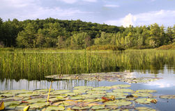 River with reeds and lily pads Stock Photo