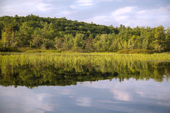 River with reeds and reflection. Squam River, New Hampshire with reeds and reflection Stock Photography