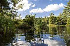 River with reeds and reflections. Squam River, Ashland, New Hampshire.  Reeds, sky, and clouds reflected in smooth water Stock Images