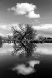 River Reflection - Ely, Cambridgeshire UK. Riverside reflection of trees in winter Stock Image