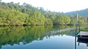 River and reflection forest in morning thailand.  stock footage