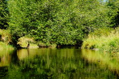 River reflection. A river reflects the green from the tress in the summer light Royalty Free Stock Images