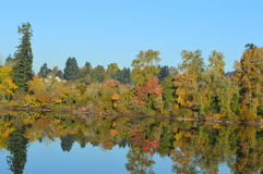 River reflections. Autumn trees and evergreens reflected in the Willamette River royalty free stock photography