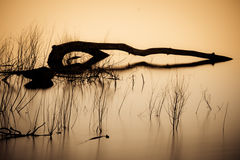 River Reflections of Driftwood. Long exposure reflections of driftwood in a river Royalty Free Stock Image