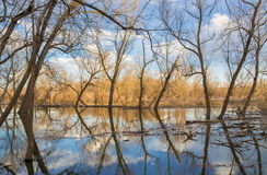 River Reflections. Reflections off the Illinois River in the back woods on a Spring late afternoon.  LaSalle, Illinois, U.S.A Stock Photography