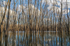 River Reflections. Reflections off the Illinois River in the back woods on a Spring late afternoon.  LaSalle, Illinois, U.S.A Stock Photo