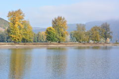 River rhine with golden leaves Royalty Free Stock Photography