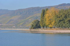 River rhine with golden leaves Stock Image