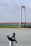 River Rhine, suspension bridge and sculptor art Royalty Free Stock Images