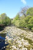 Spring On The Ribble. The river Ribble at Springtime - the river Ribble runs through part of the Yorkshire Dales National Park in the county of Yorkshire Stock Images