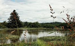 River  riverbank wetlands, Lewis and Clark River. Lewis and Clark River, near Fort Clatsup, south of Astoria, Oregon in the Pacific Northwest. Lazy riverbank Royalty Free Stock Image