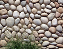 River Rock Wall with Plant. royalty free stock image