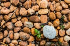 River rocks background Stock Image