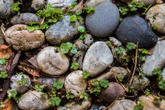 River rocks background Royalty Free Stock Images