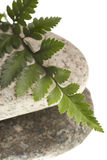 River rocks and fern isolated Royalty Free Stock Images