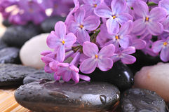 River rocks with lilac flower Stock Image