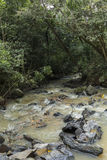 River with rocks in the middle of the green forest trees. Wide angle vertical Royalty Free Stock Photo
