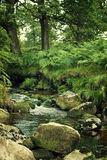 A river with rocks in a spooky green forest Stock Photos