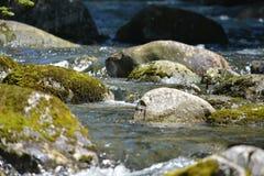 River Rocks Royalty Free Stock Image