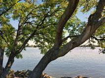 River rocks and tree Royalty Free Stock Photography