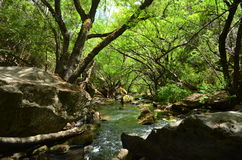 River between rocks and trees. Hidden cascade in a dark place full of trees in Patagonia, Argentina Stock Image