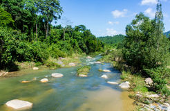 The river with a rocky bottom in the jungle Royalty Free Stock Photography