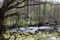 River Rothay in English Lake district, Cumbria Royalty Free Stock Photos