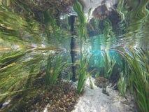 River run. Spring freedive beauty Royalty Free Stock Photo