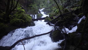 River Running Through California Forest. A river tumbles noisily over rocks as it flows through a beautiful forest in northern California stock video footage