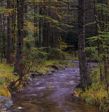 River running through a forest Royalty Free Stock Photos