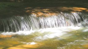 River running through forest stock video footage