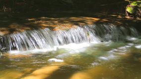 River running through forest stock footage