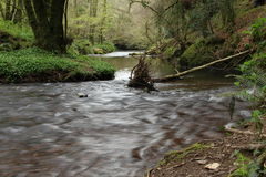 River running through the forest. Woodlands, or woods. This is Glenbower Wood in Ireland Stock Image